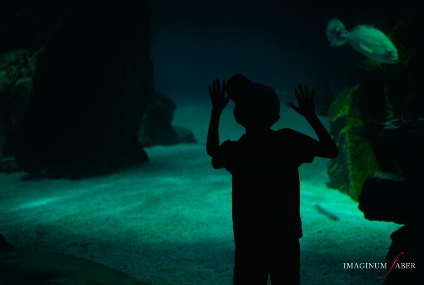 Aquarium of Genoa, Liguria, Italy