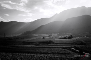 Vineyards near Kaltern, Überetsch, South Tyrol, Italy