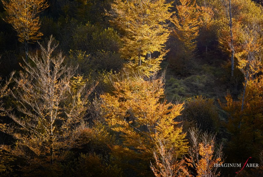 Trees in Fall, Val d'Aveto, Liguria, Italy